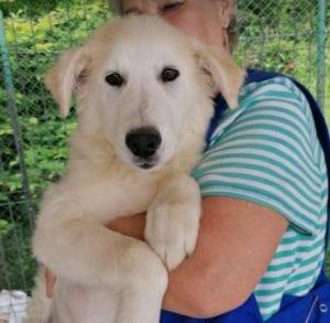 Bonnie a cream coloured Romanian rescue dog   1 Dog at a Time Rescue UK