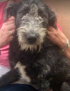 Danny a black Romanian rescue dog | 1 Dog at a Time Rescue UK