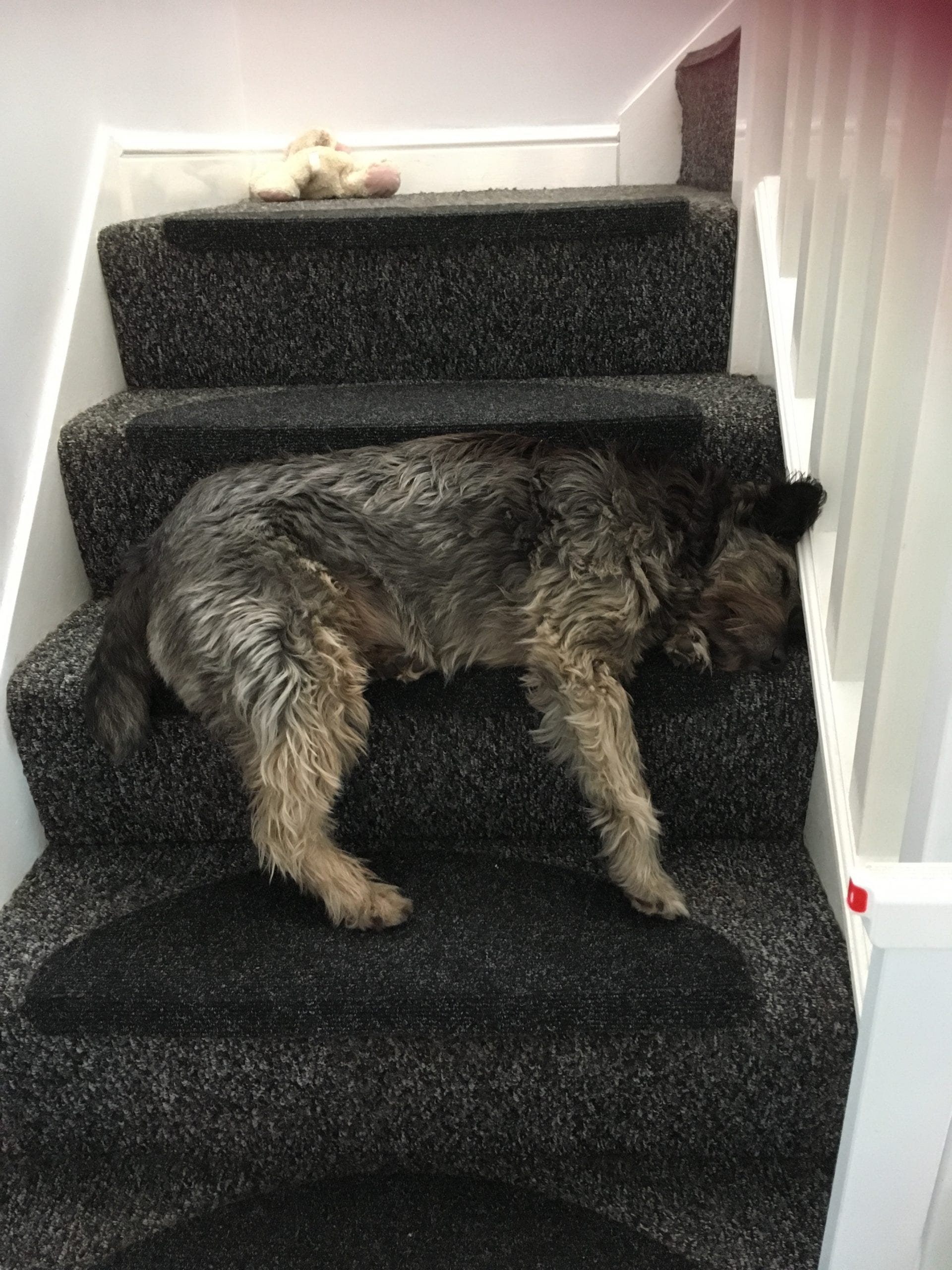 Lily a brown Romanian street dog asleep on the stairs | 1 Dog At a Time Rescue UK