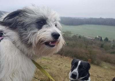 Maddie and Murry two Romanian rescue siblings | 1 Dog At a Time Rescue UK