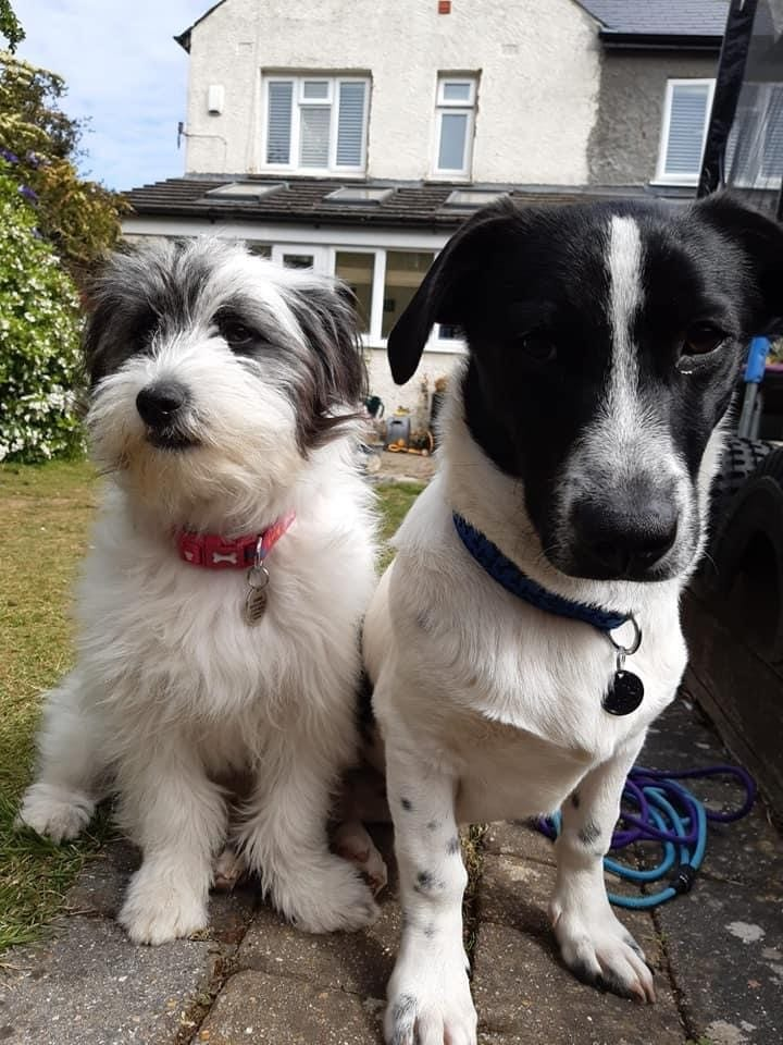Maddie and Murray two Romanian street dogs | 1 Dog At a Time Rescue UK