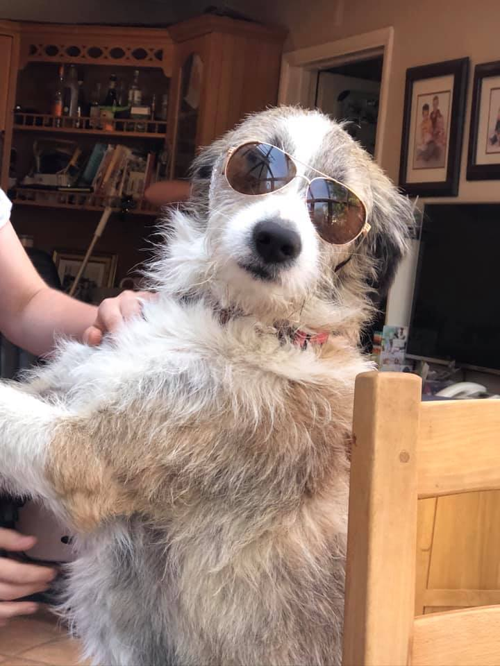 Raffles a Romanian rescue dog wearing sunglasses | 1 Dog At a Time Rescue UK