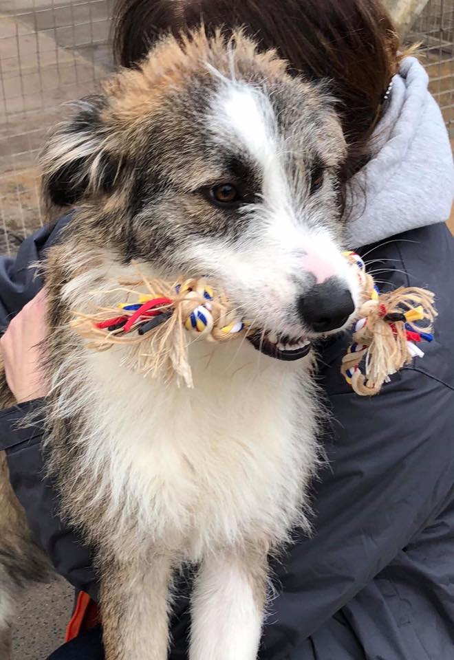 Raffles and brown and white Romanian dog with a toy | 1 Dog At a Time Rescue UK