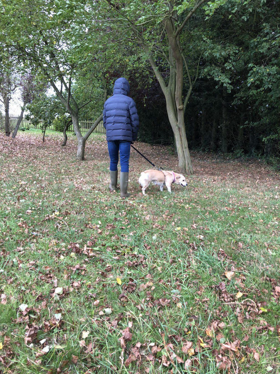 Hope a three legged rescue dog on a walk 1 Dog At a Time Rescue UK | Dedicated To Rescuing and Rehoming Romanian Street Dogs