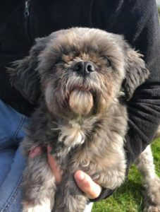 Muffin a brown Romanian rescue dog | 1 Dog at a Time Rescue UK